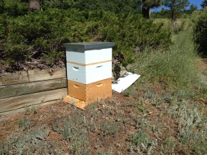 Bee hive 2 boxes and feeder box