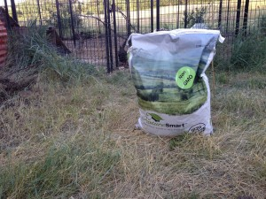 Organic Chicken Feed from Nature Smart