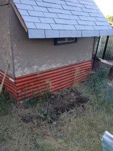 Planting area for Comfrey