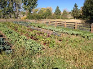 Chatfield CSA garden