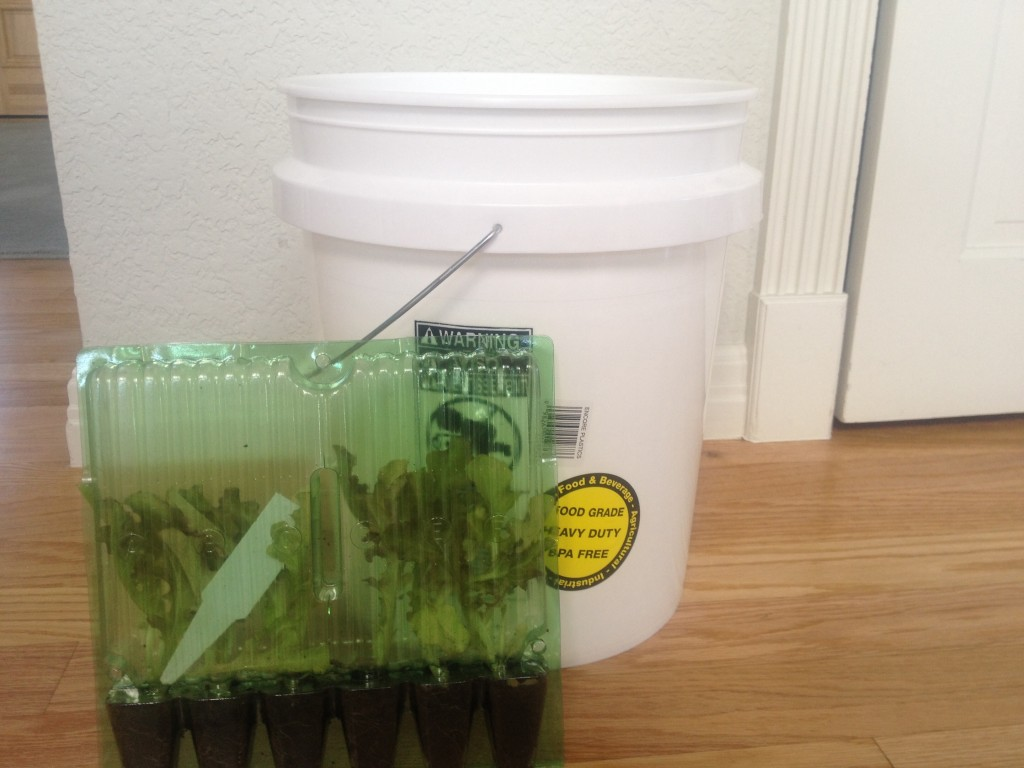 5 gallon bucket for winter growing
