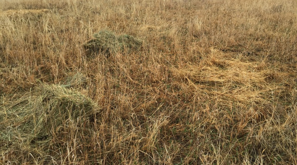 Hay feed in the pasture where we want to add more ground cover/litter.