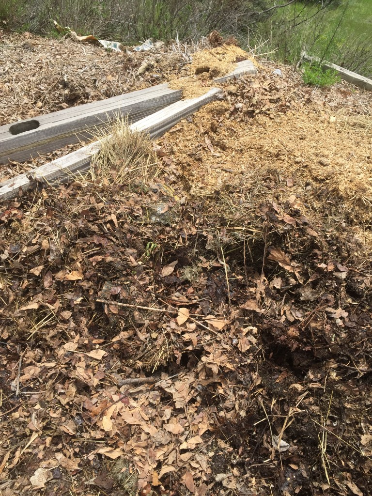 Compost pile of leaves with some cow manure.