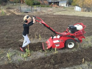 2915 garlic tilling with help
